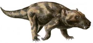 alfred fossil cyn