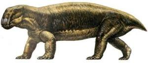 alfred fossil lystro