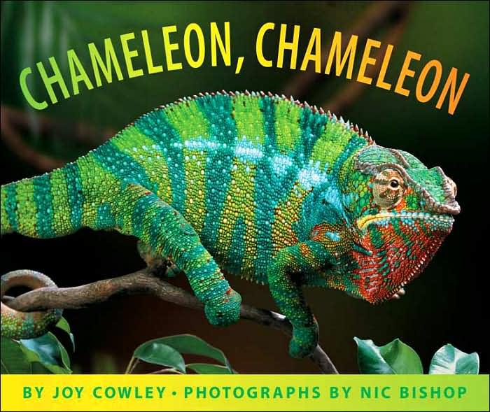 chameleon_gryphon06