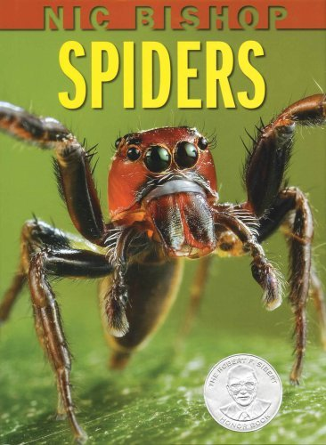 spiders_gryphon08