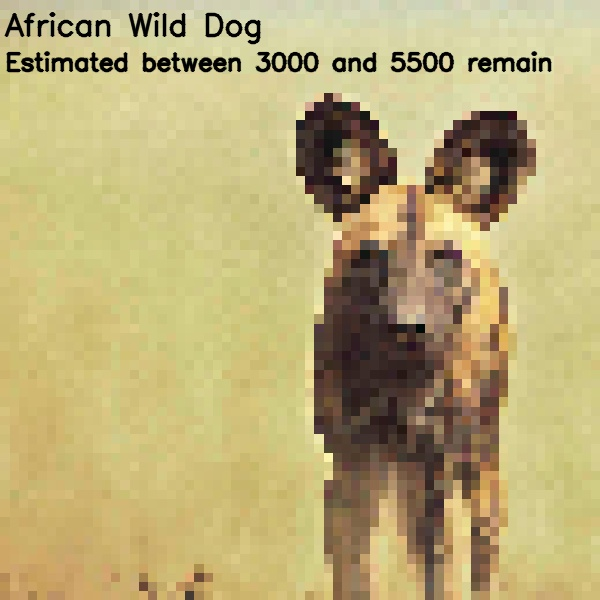 A pixelated image of an African Wild Dog. The pixelation represents approximately how many of this endangered species remain in the wild (estimated between 3000 and 5500). The Wild Dog is still distinguishable, but is not clearly visible due to the pixelation.