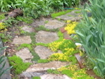 Paving stones bordered by green & yellow plants
