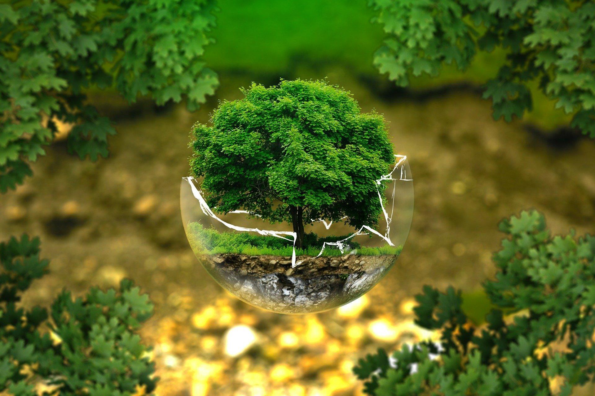 tree in broken glass sphere in forest