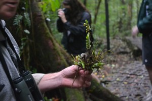 Mark, a ranger in the park, explains that there are at least 8 epiphytic organisms living on this piece of bark.