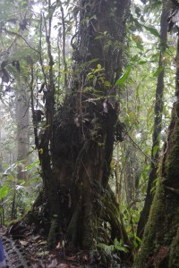 A plethora of epiphytes live on a tree in the Monteverde Cloud Forest Preserve.