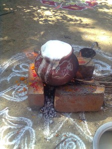 Pongal ritual- fresh milk boiling over the vessel