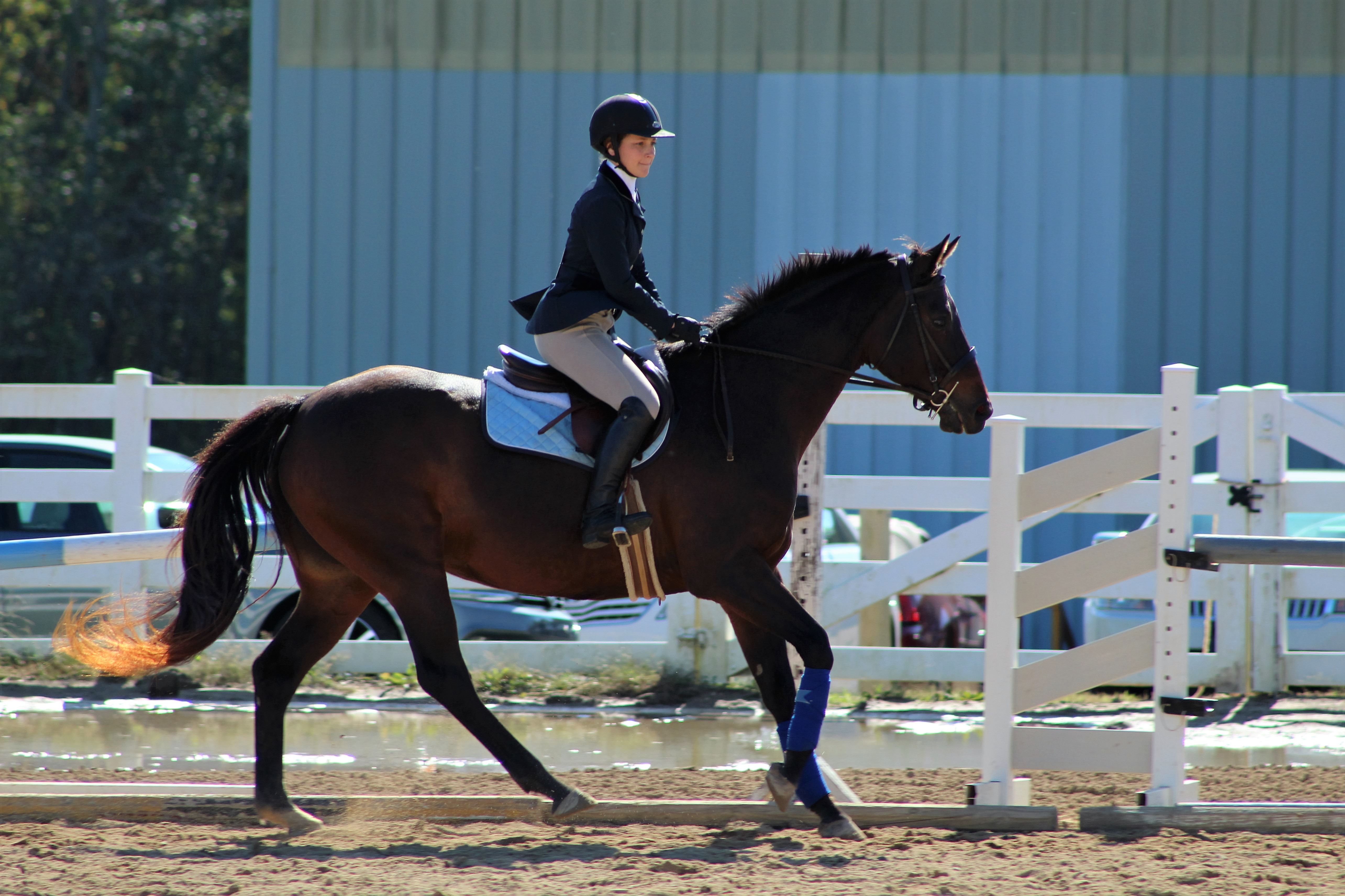 English Show Team Illini Equestrians