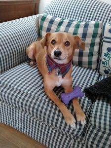 Photo of dog sitting on a couch