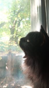 Photo of cat looking out a window