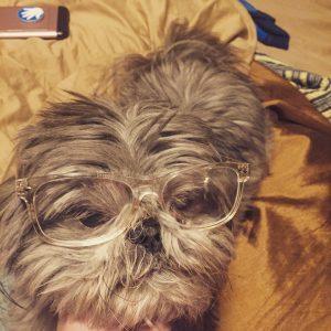 Photo of dog wearing glasses