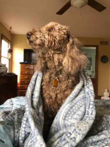 Photo of dog in a blanket