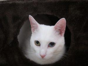 Photo of Juliana's cat