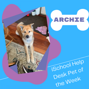 Decorative graphic featuring a medium-sized dog (golden retriever chow mix) with golden hair. He's sitting down with his front paws stretched forward. Graphic reads: Archie; iSchool Help Desk Pet of the Week