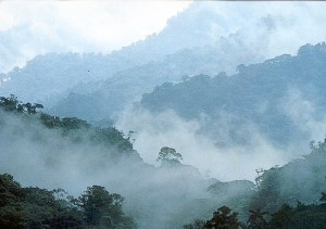 02_cloud_forest