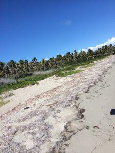 A black plastic bag pollutes the beach