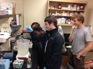 A group of 4 college students is gathered around a large bucket on a hotplate. The are focused on the pH meter readout.