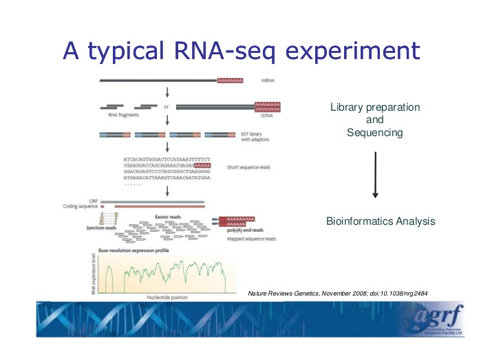 RNA-seq experiment outline (presentation by S. Tyagi)