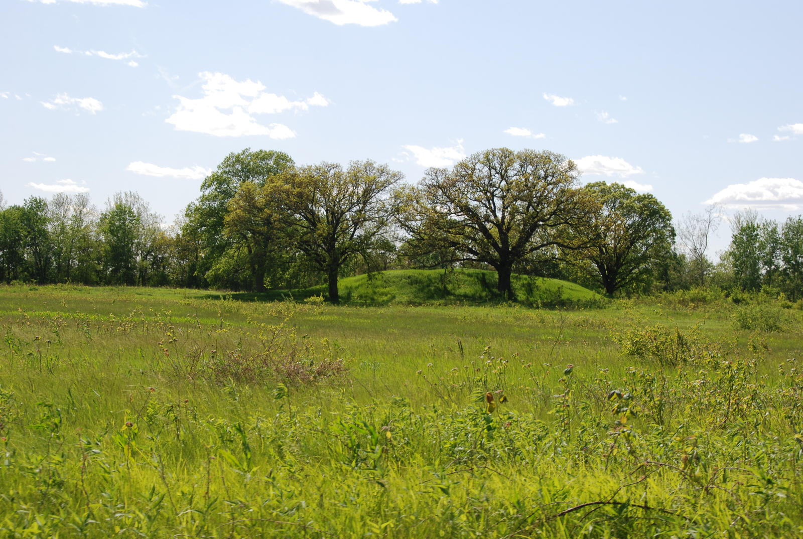 Dickson Mound by MattHucke [CC BY-SA (https://creativecommons.org/licenses/by-sa/3.0)]