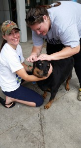 OTS Fall Pet Wash - 9/27/15