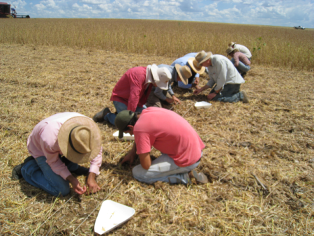 Researchers employ traditional measurement methods in a Brazilian field. Photo Credit: Marv Paulsen/ADM Institute