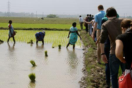 Students observe planting in a paddy field Credit: ADM Institute/Kari Wozniak