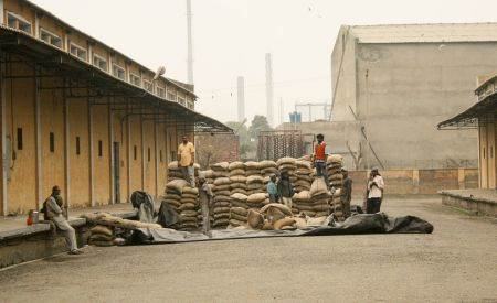 As it begins to rain, laborers at an FCI facility cover sacks of grain in open storage. Credit: K.Wozniak/ADMI