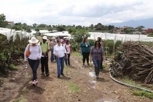 A group of participants of the IICA CSAM workshop during the tomato farm field visit. / credit: http://www.iica.int/es/galeria/gira-de-campo-plantación-de-tomate-y-planta-empacadora