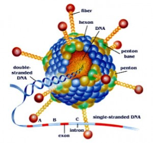 An artist's rendering of a molecule.