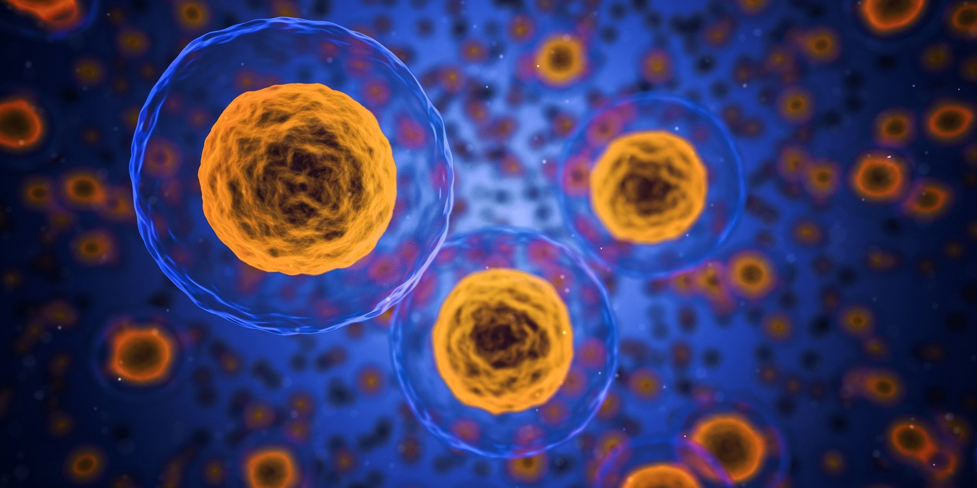Human cells for research