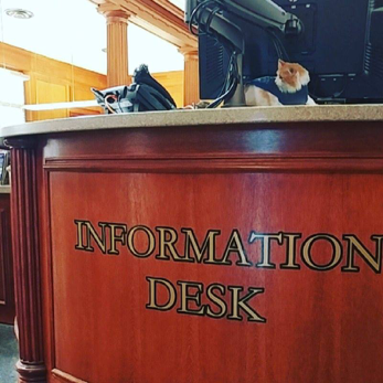 Uggles at the Main Library Information Desk