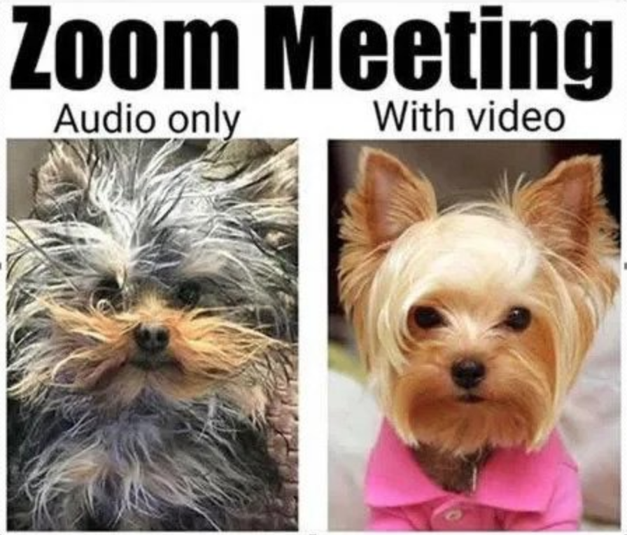 "Screenshot of two dogs: one is captioned with ""Audio only"" with a dog with scraggly hair, and the other is captioned with ""With video"" and the dog is neatly groomed and wearing clothes"