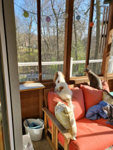 Hattie and Lyla watching Jayde jump on the trampoline from the sunroom