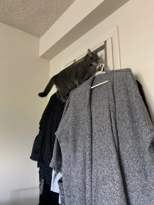 The cat, Dusty Butt, climbing on top of hanging clothes.