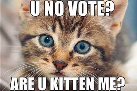 U no vote? Are u kitten me? (picture of kitten)
