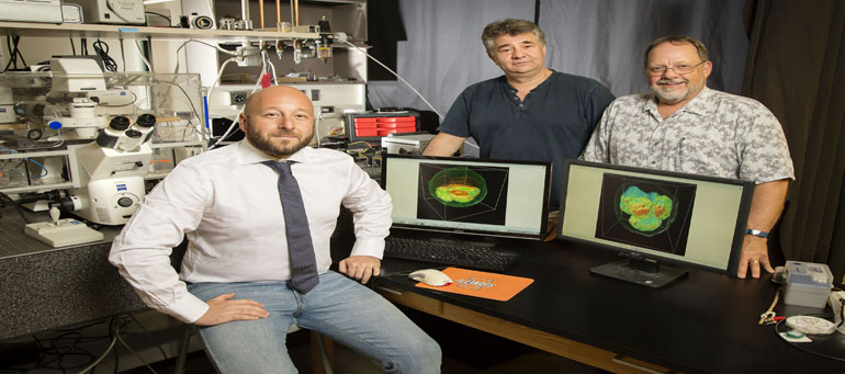 from left: Marcello Rubessa, visiting scholar; Gabi Popescu, professor of electrical & computer engineering AND bioengineering; and Matthew Wheeler, professor of animal sciences. cow embryo displayed on screen