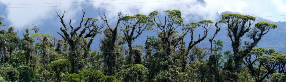 Dalling Lab of Tropical Forest Ecology