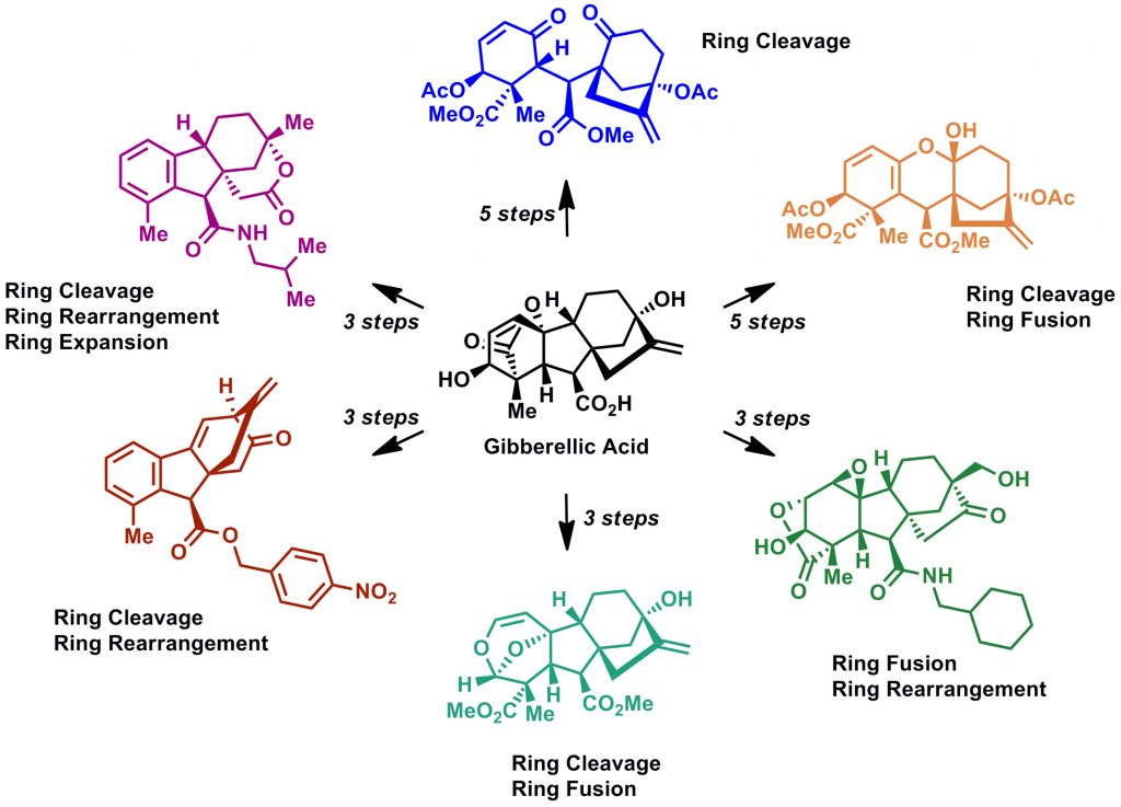 Gibberellic acid was rapidly converted into six highly diverse and complex scaffolds.