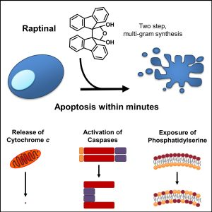 Chemical Tools for Study of Cell Death and High-throughput Screening