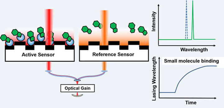 Diagram showing Active Sensor, Reference Sensor and Optical gain. Bar chart showing Intensity per Wavelength and another bar chart showing Small molecule binding on Lasing Wavelength per Time.