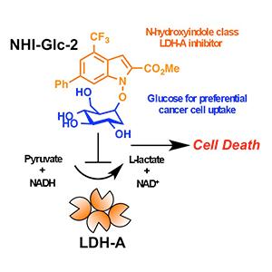 LDH-A Inhibition