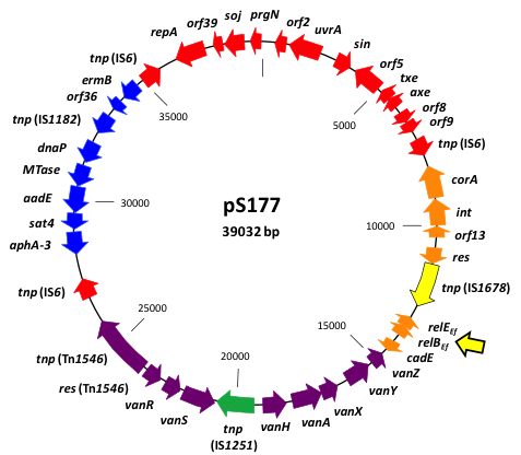 Toxin-Antitoxin plasma diagram.