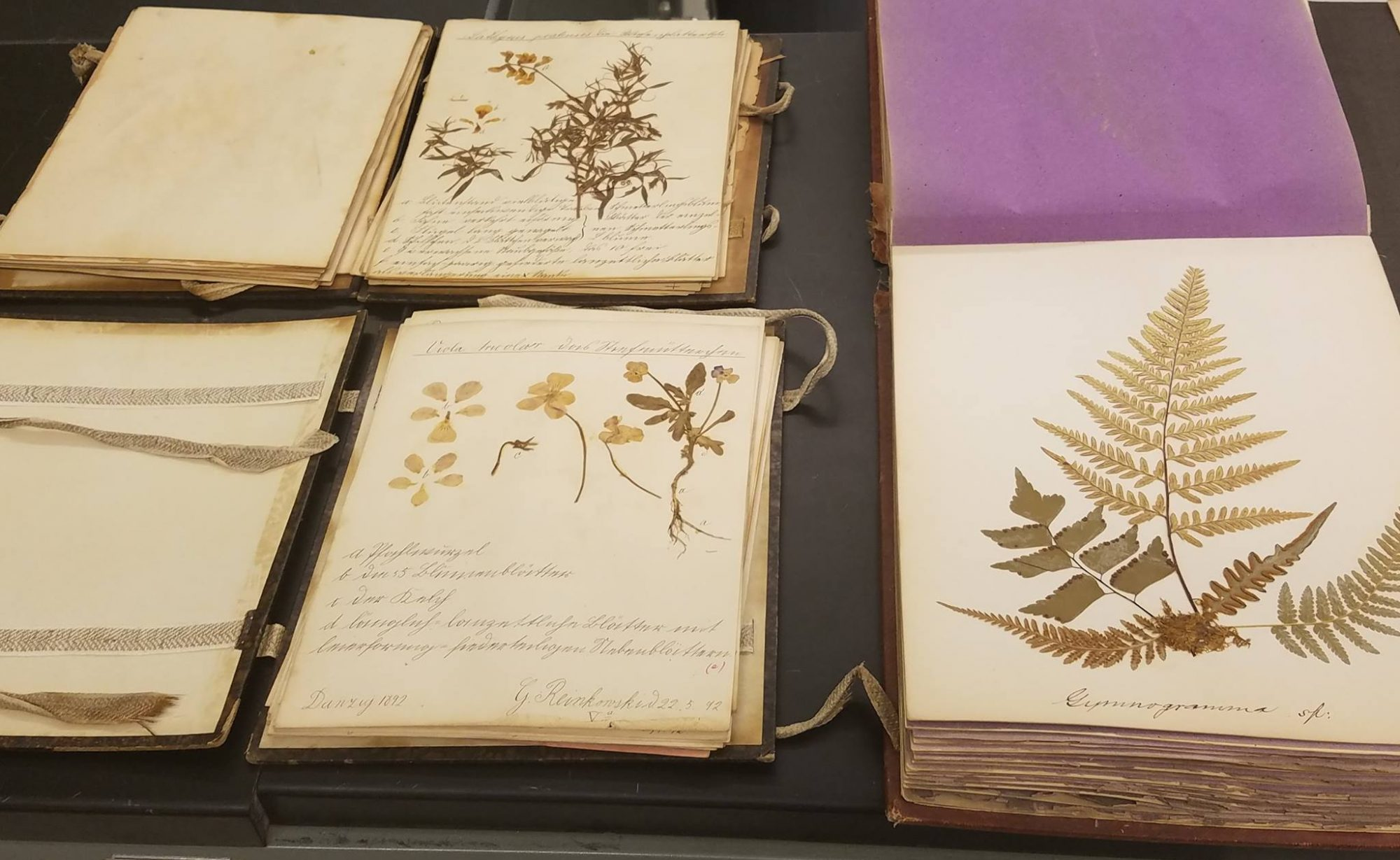 University of Illinois Herbarium