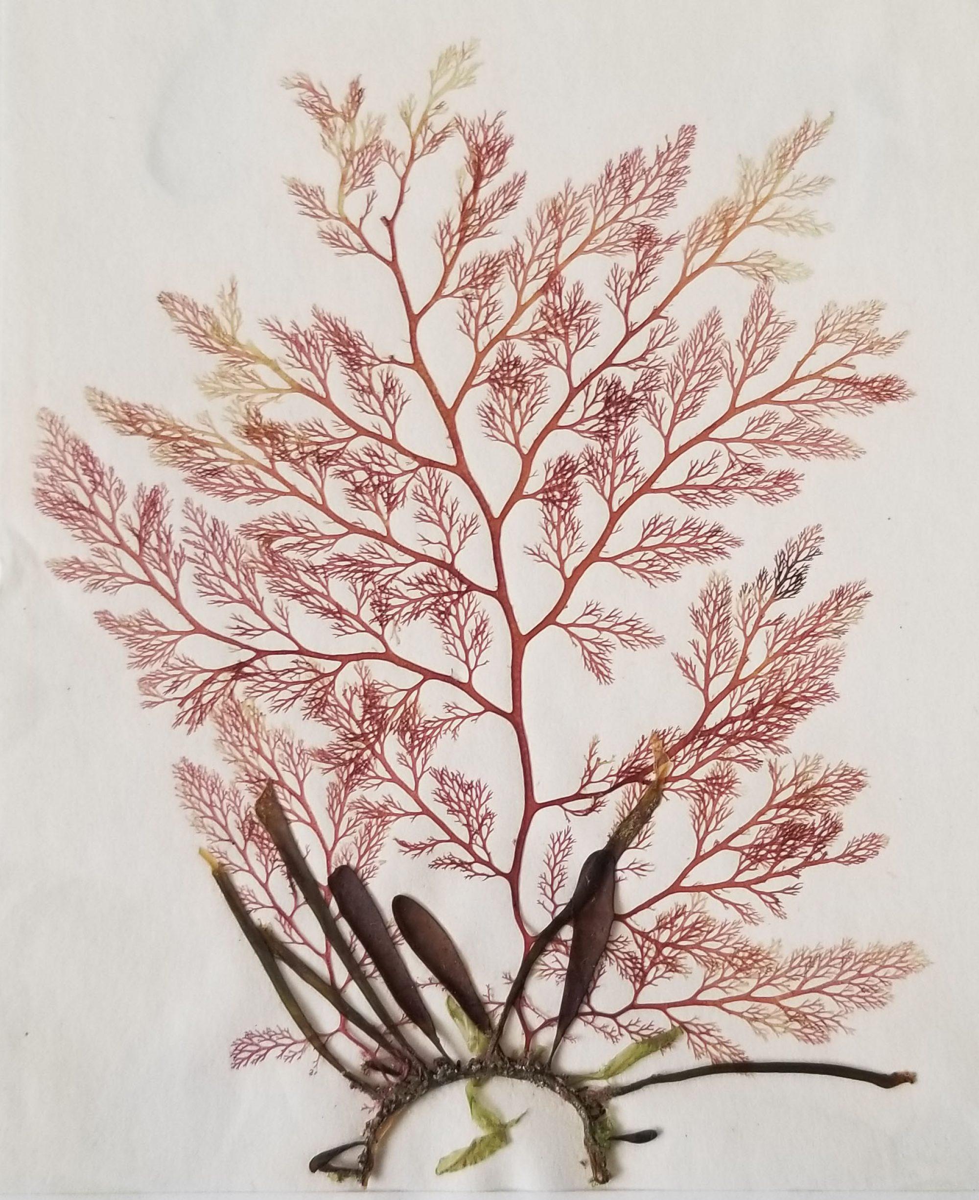 University of Illinois Herbarium