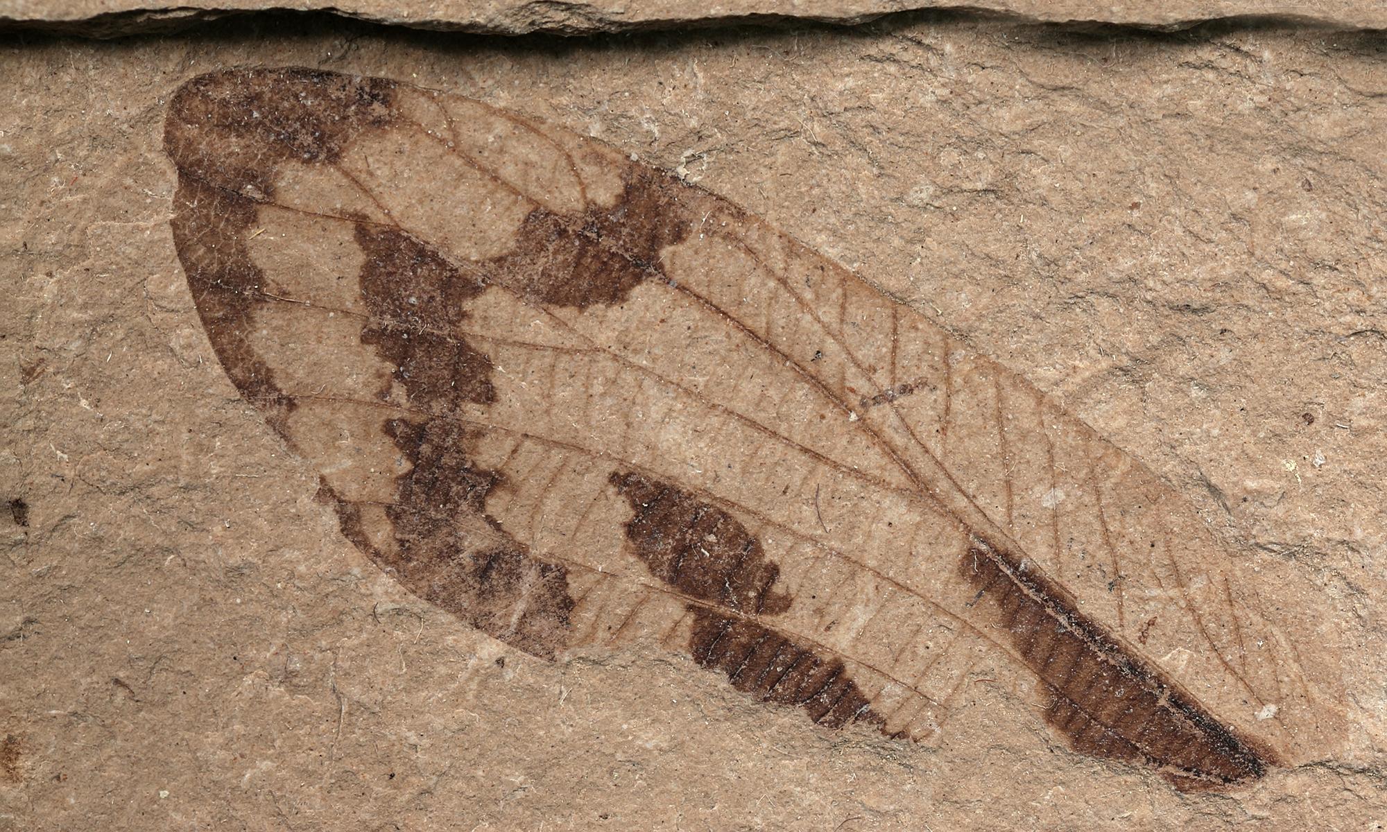 PRI Center for Paleontology