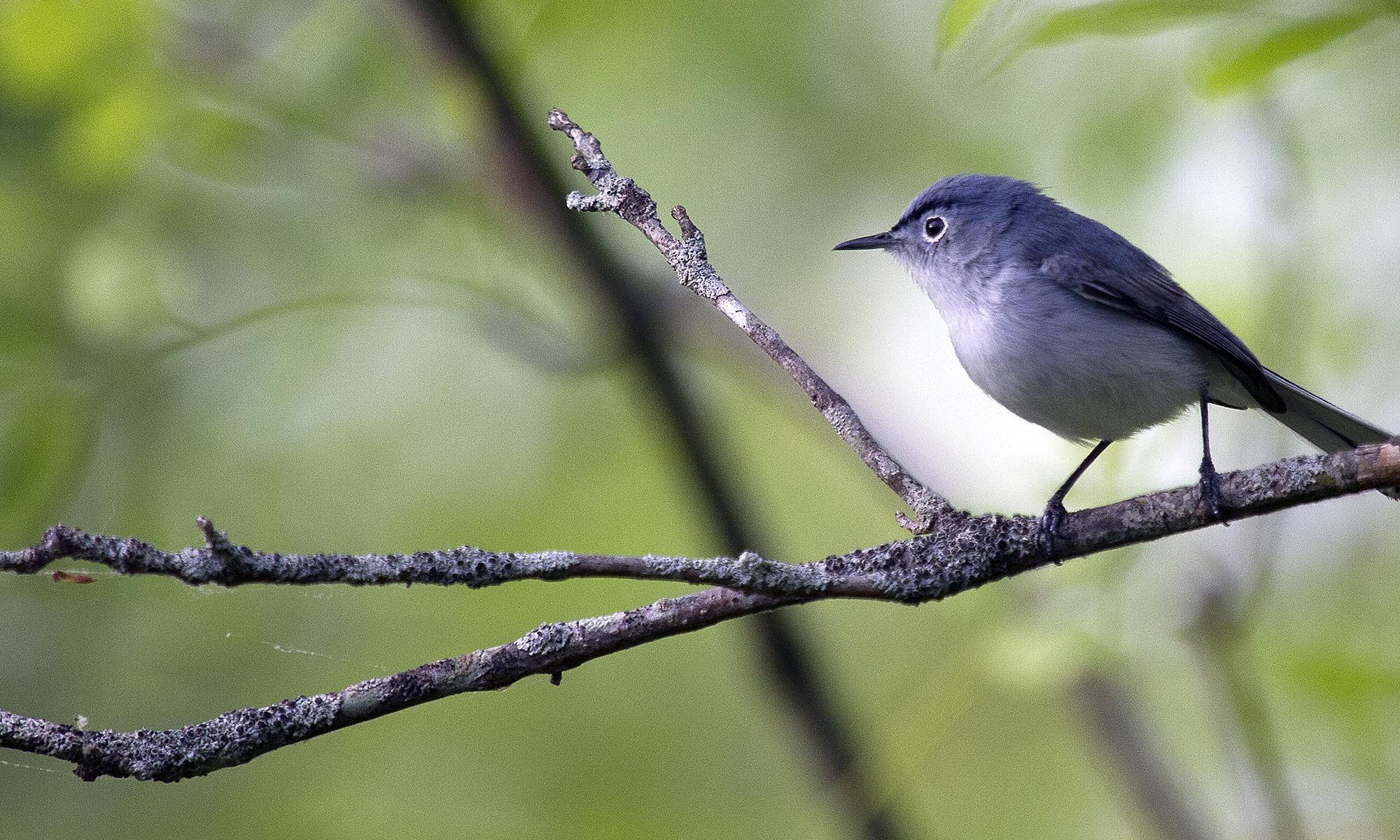 Spring Bird Count