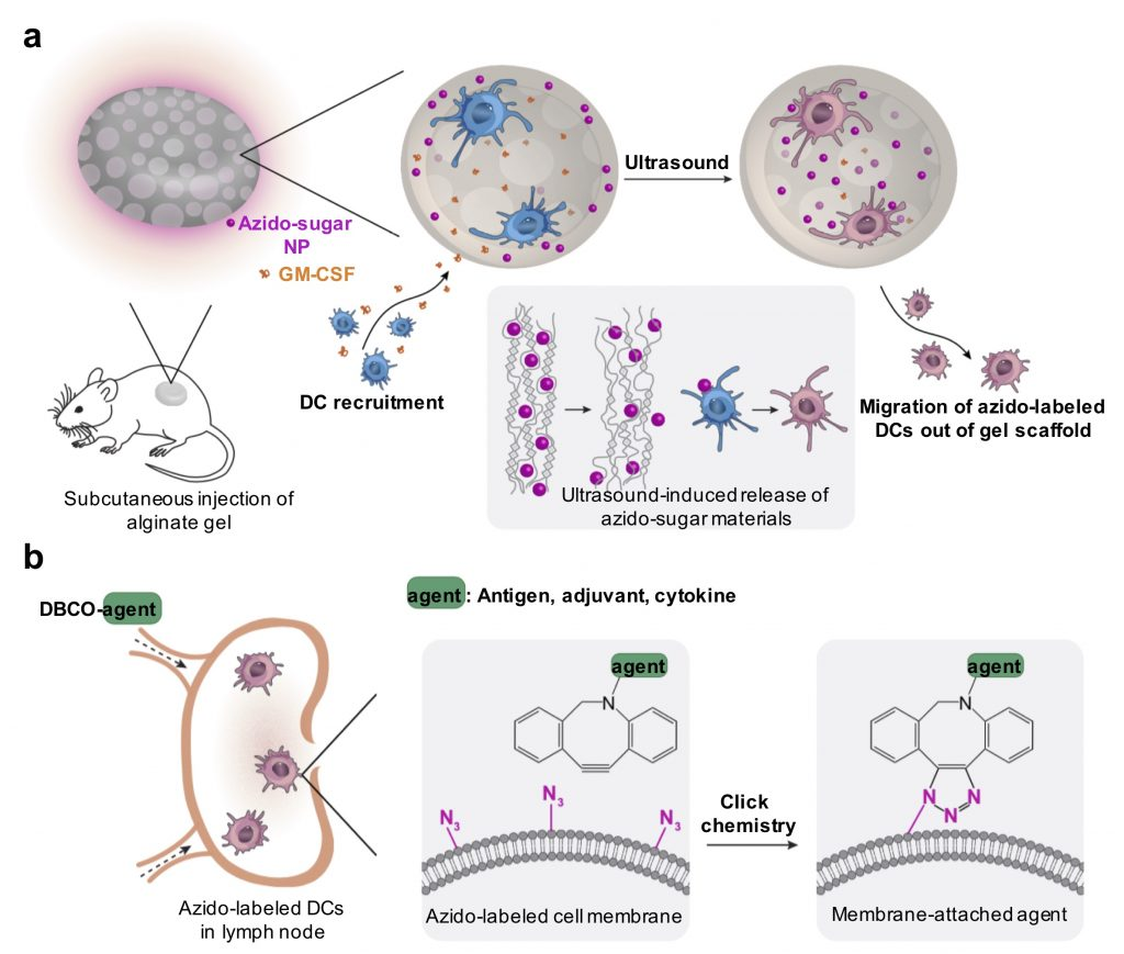In vivo selective imaging of metabolic glycosylation with