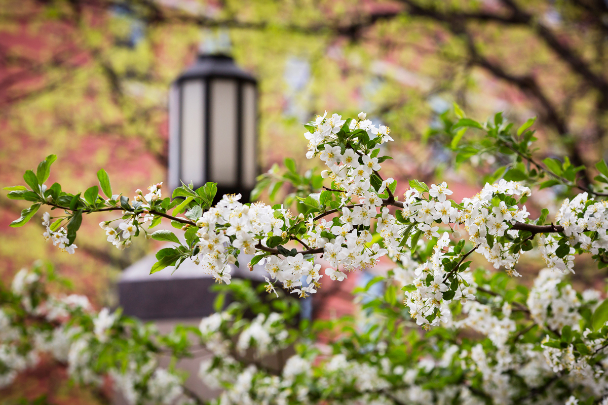 Image of spring foliage and a black lantern